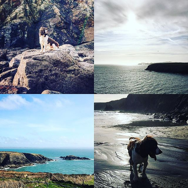 Dog friendly Caerfai Bay